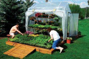 Бизнес на выращивании зелени: как организовать и сделать процветающим