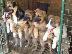 Как открыть приют для животных пошагово: этапы развития