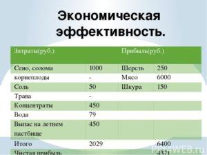 Разведение баранов: расчеты по затратам + план